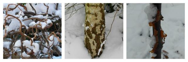 snow.bark