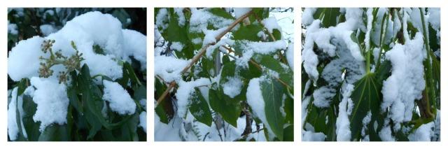 snow.foliage1