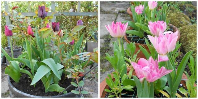 tulippots