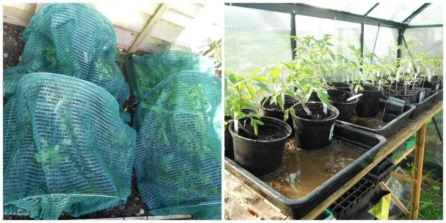 greenhouse.hols