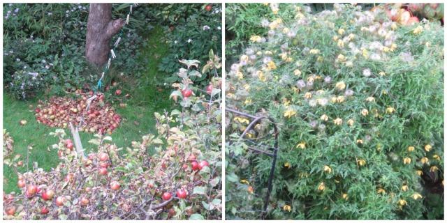back.gardens