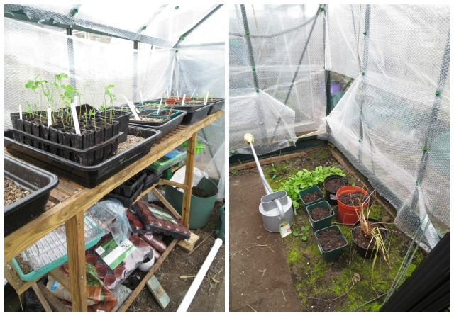greenhouse.1