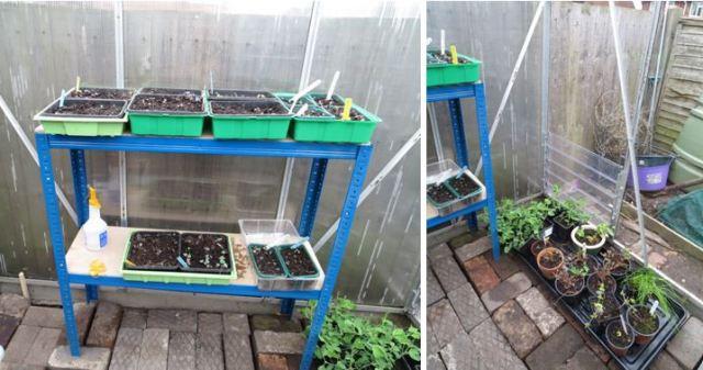 greenhouse.2