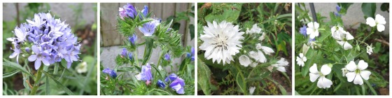 blue.white.annuals