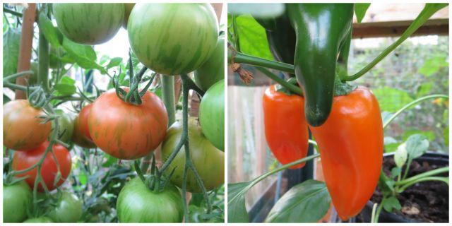 greenhouse.peep