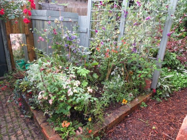 Rambling in the Garden
