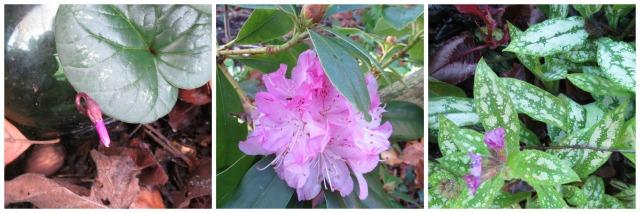 pink.Jan16