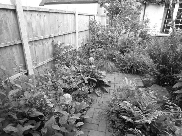 b&w.shrub
